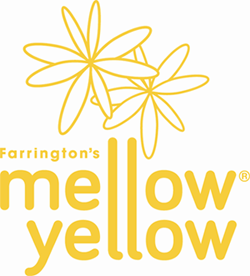 Mellow Yellow Recipes