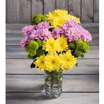 Morrisons Chrysanthemums Bouquet